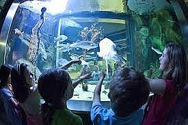 visserijmuseum kids