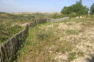 Duinen Belgische kust